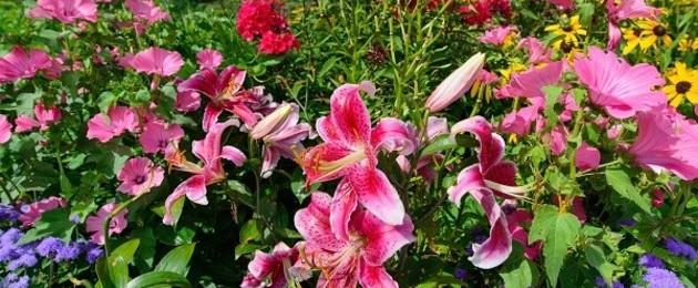 Qu significa so ar con flores ayuda m stica for Que significa plantas ornamentales